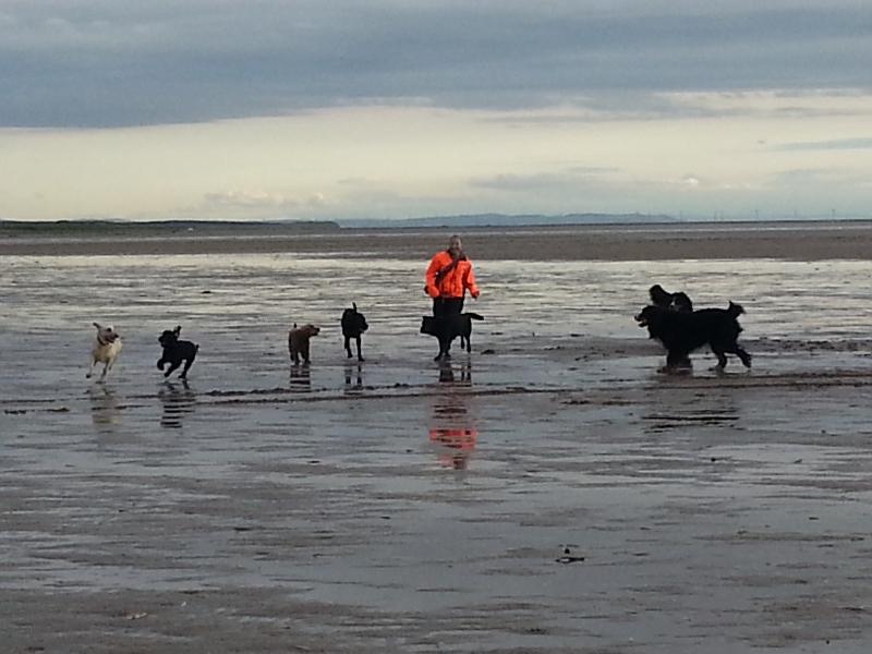 Dog Training Thornton Merseyside